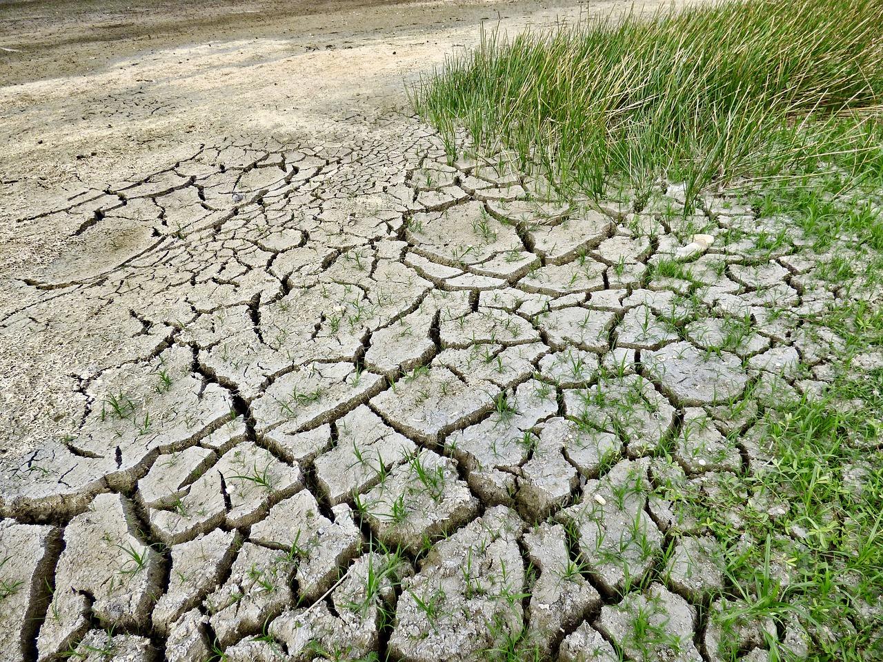 Drittes Dürrejahr in Folge –Julia Verlinden fordert langfristige Maßnahmen zur Wasserhaltung
